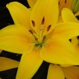 bee close-up