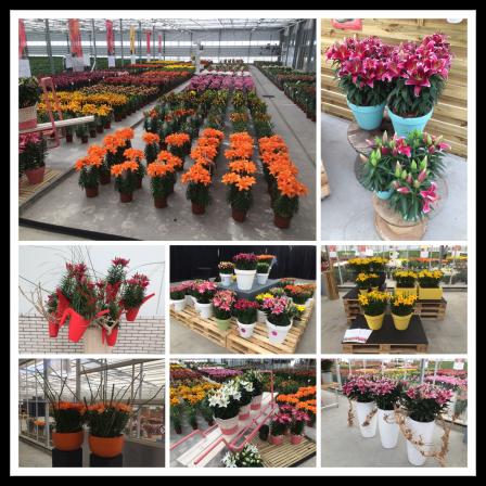 FlowerTrials 2017 collage