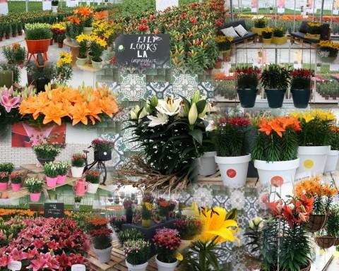 FlowerTrials 2018 collage
